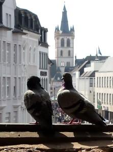 Tauben in der Porta Nigra, Trier