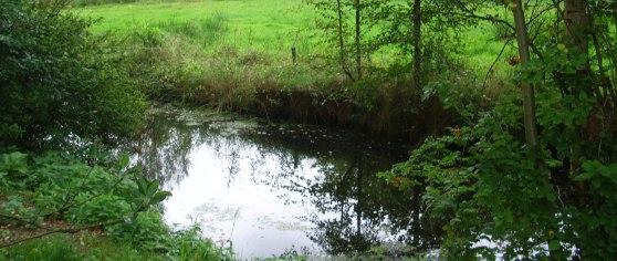 Tümpel bei Moorhausen