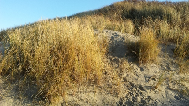 Juist Strand Düne Winter Strandgras