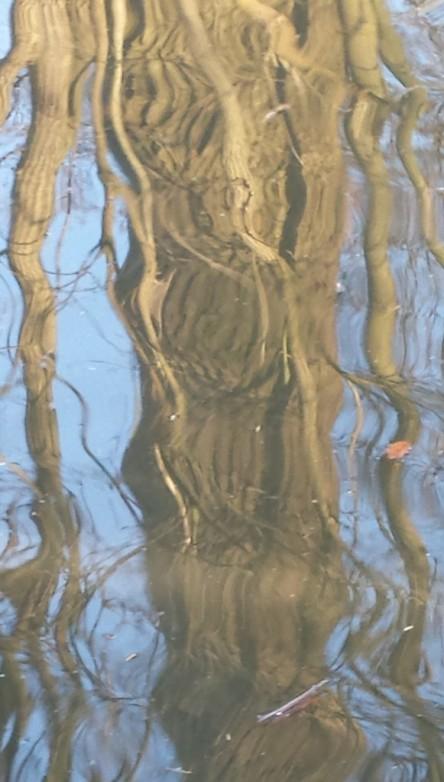 gespiegelter Baum