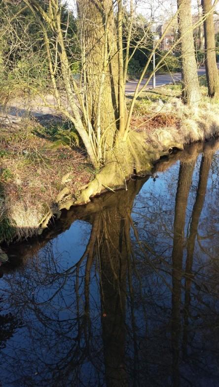 gespiegelte Bäume