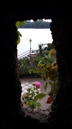 Ausblick, Rose, Burgfenster