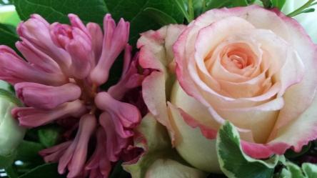 Rose und Hyazinthe