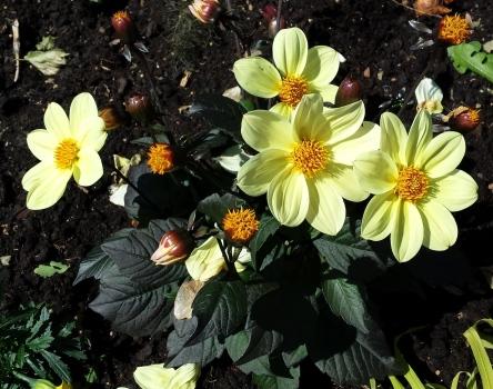 gelbe Blüten
