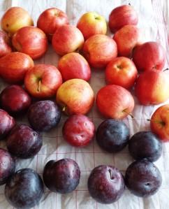 Äpfel und Pflaumen