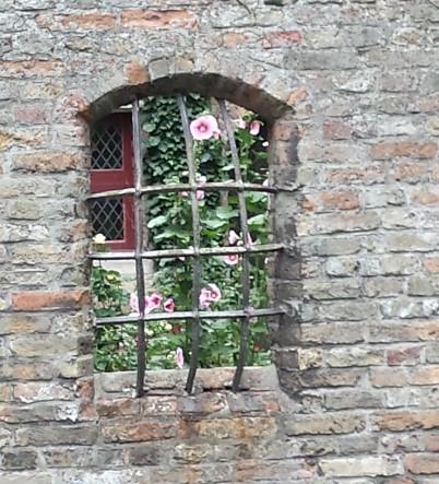 Brügge, Rose an Gitter