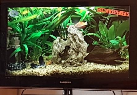 Aqurium im Fernsehen