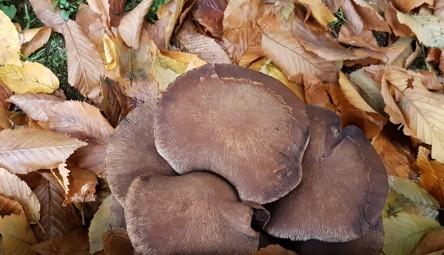 Pilze und Blätter