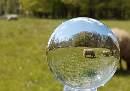 Kugelfoto, Schaf, Hessenpark