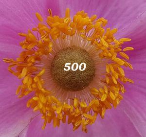 500, Blume, Makro
