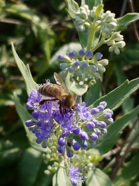Biene, Blüte