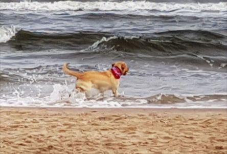 Hund spielt im Wasser, am Meer