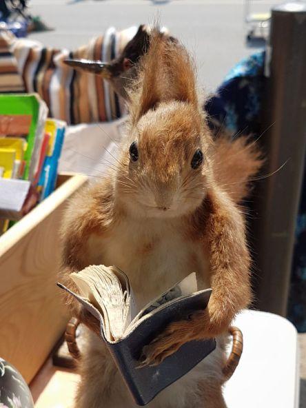 lesendes Eichhörnchen