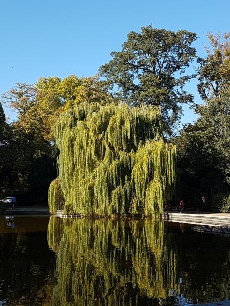 Trauerweide, Spiegelbild See,Bethmannpark