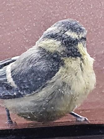 Vögelchen dreht sich um